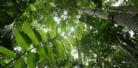 Báo cáo đánh giá tác động môi trường giá rẻ