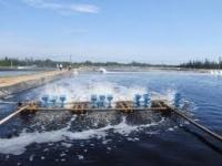 Báo cáo đánh giá tác động môi trường trong nuôi trồng thủy sản