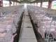 Đề án bảo vệ môi trường cơ sở chăn nuôi gia súc, gia cầm